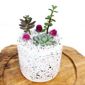 Live Succulent Arrangement Small Terrazzo Planter